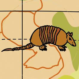 Caly Globe Maxi50 animaux illustration